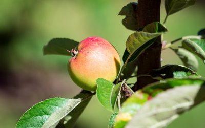 Comment reconnaître des produits bio ?
