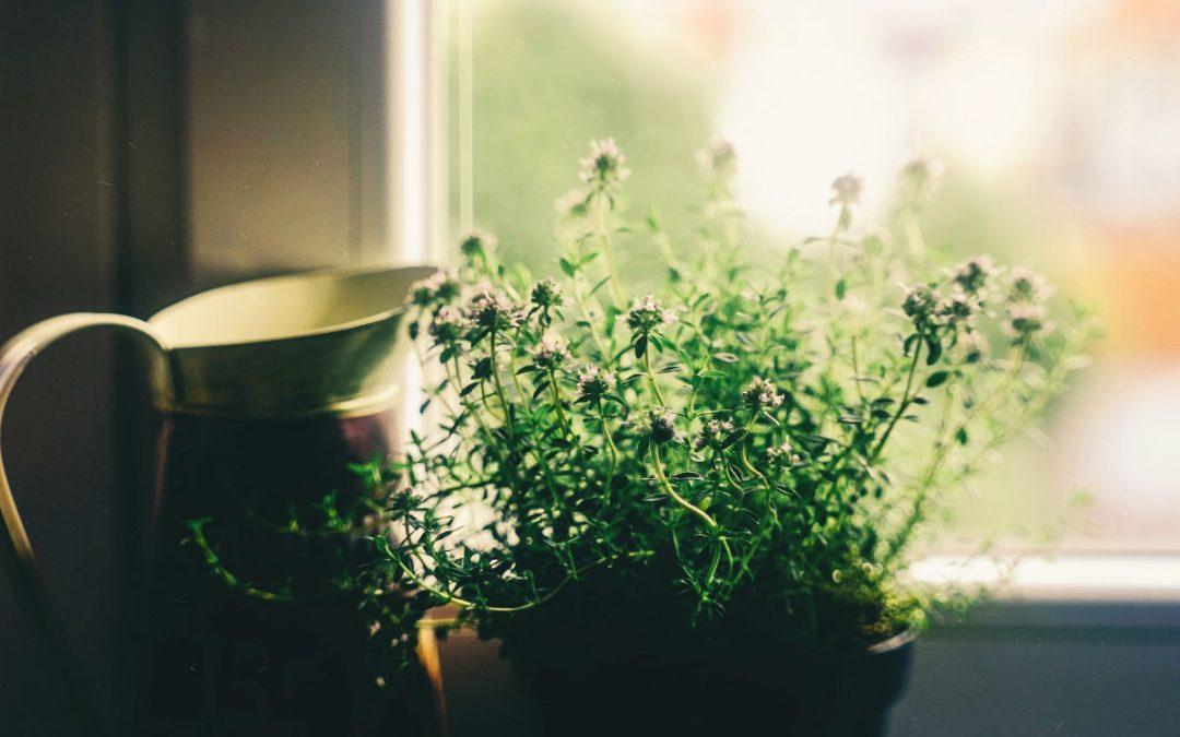Pompe à chaleur : la solution écologique et respectueuse de l'environnement
