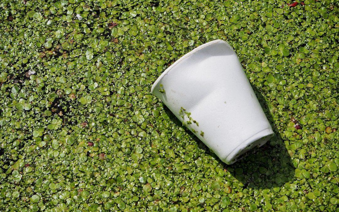 Zoom sur l'emballage écologique